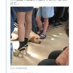 【炎上】JR189系「電車で普通に犬連れてる人いるんだけど…」←「盲導犬知らないの?」「そもそも盗撮ですよね」→逆切れ&開き直り【バカッター】