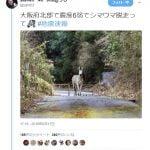【大阪地震】「シマウマ脱走」ツイートのツイッター、イキりだす「明日も明後日も余裕で息してるw刑事処罰wどうぞご自由に」【デマッター】