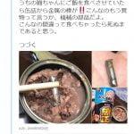 """【衝撃】ペットラインのキャットフードに""""金属棒""""が混入 購入者が怒りの告発"""