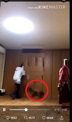 【@aris3781】犬虐待動画拡散!犯人の女の言い訳がひどすぎる