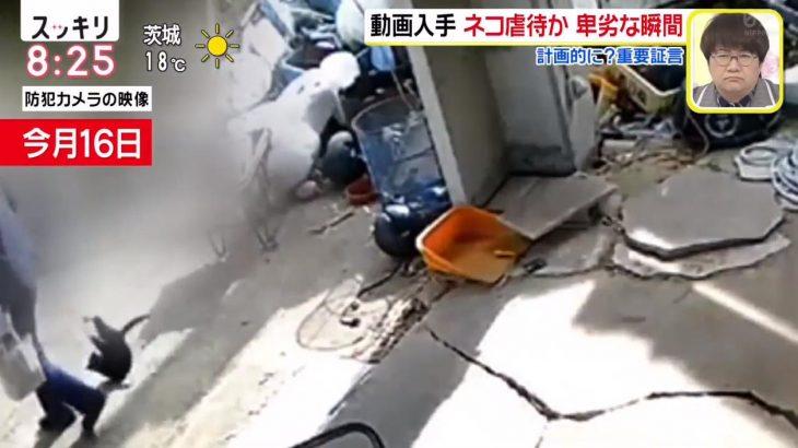 【三重】鈴鹿市で猫虐待→連れ去り事件 犯人はどのような罪に問われる?