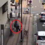 【動画】新潟市中央区万代で長髪男が取っ組み合い→警察官を振り切り車で逃走