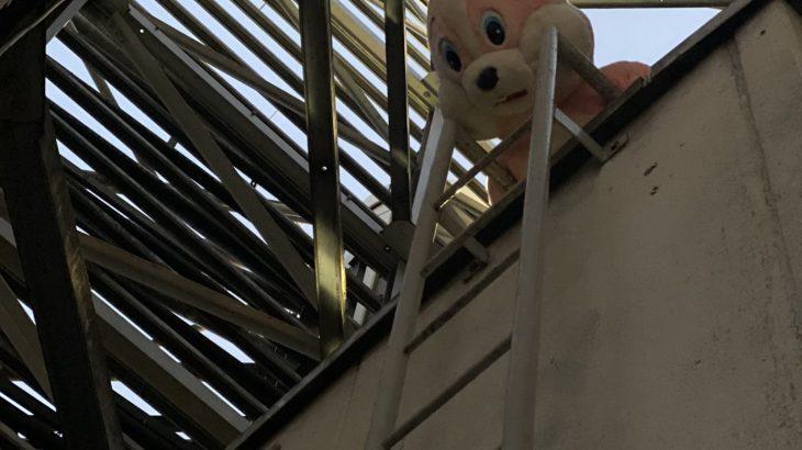 【恐怖】新宿にピンクのうさぎの着ぐるみが出没!「ダーウィンズゲームやん」とネタにされるが…