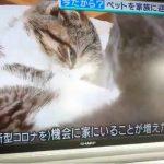 """【悲報】新型コロナで暇な人、""""おもちゃ感覚""""でペット飼ってしまう"""