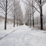 【元気な高齢者たち】雪の中、今日もドラッグストアにマスク求め行列