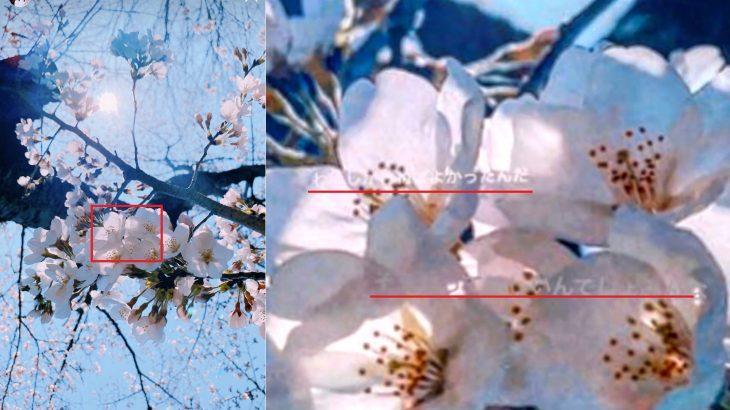 【炎上】足立梨花、インスタストーリーの桜写真に「わたしがしねばよかったんだ」