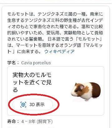 【衝撃】Googleで「モルモット」と検索し3D表示をタップするとARで登場!「ぷいぷい」って鳴き声がかわいい