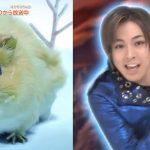 【実写出演】ツムギちゃん、モルカー界の蒼井翔太と言われてしまう