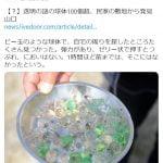 【朝日報道】民家の敷地の謎の球体の正体が話題に!「園芸用ビーズ?」「消臭ビーズ?」「ぷよぷよボール」