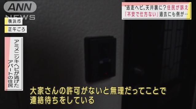 【灯台下暗し】確保されたニシキヘビ、「最初からアパートの屋根裏を探していればすぐ見つかった」との指摘 なぜ大家は許可を渋った?